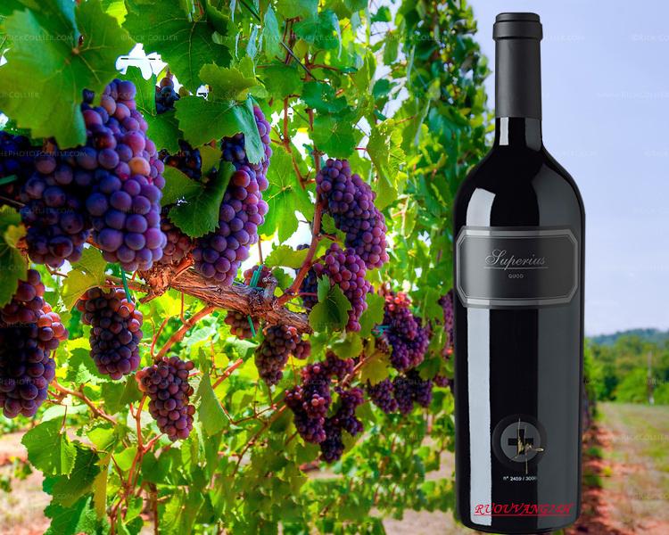 Rượu VangQuod Superius