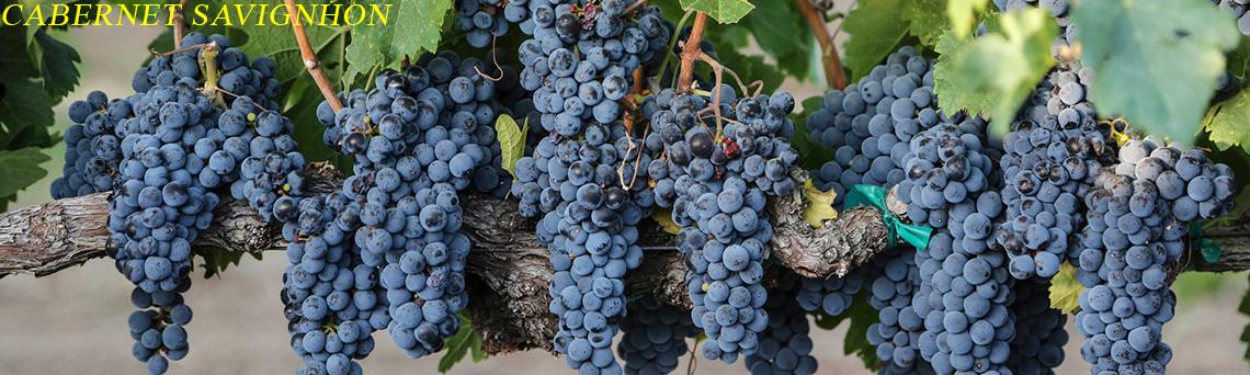 Rượu vang Cabernet Savignhon