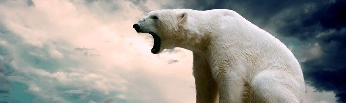 Bia Gấu 8