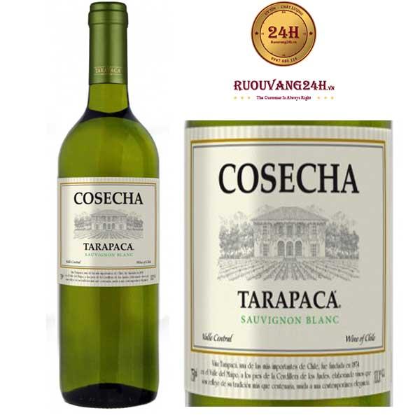 Rượu Vang Trắng Tarapaca Cosecha Sauvignon Blanc