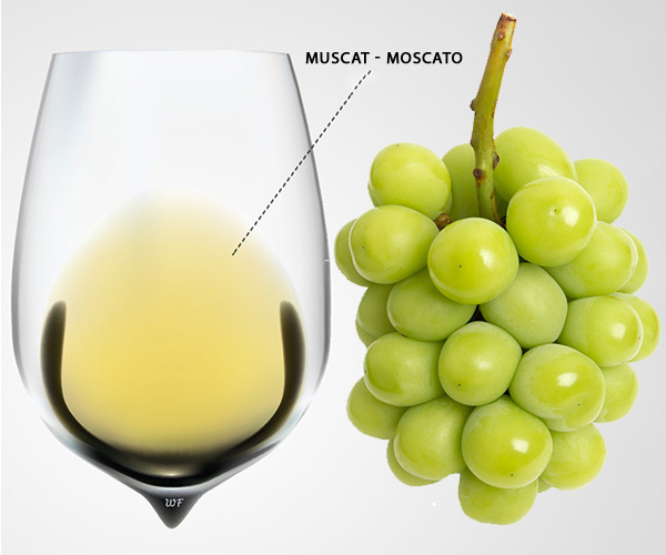 GIỐNG NHO MUSCAT - MOSCATO