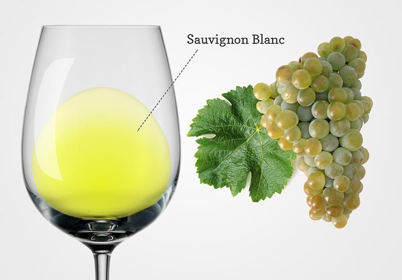Nho Sauvignon Blanc là gì?